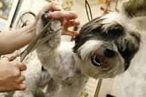 Čepička nebo šátek jsou módní a praktické doplňky pro psy či kočky. Sortiment zboží je mnohem větší. Sehnat se dá cokoliv, od rtěnek po vyšívané polštářky.