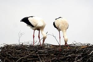 Foto ze společné úpravy hnízda