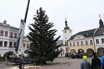 Stěhování vánočního stromu od Perly na náměstí v Ústí nad Orlicí.