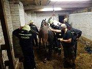 Záchrana kobyly si vyžádala zásah hasičů