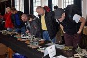 Muzeum starých strojů a technologií v Žamberku v první prosincové sobotě premiérově hostilo čtyřiatřicátý ročník výstavy a soutěže plastikových modelů Žamberecký divočák. Na své si přišli nejen obdivovatelé hotových modelů, ale i děti, které si mohly v rá