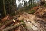 Nová výsadba nahradila v Ústí nad Orlicí vichřicí poničené stromy.
