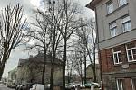 Nebezpečné lípy v Sadové ulici v České Třebové čekají na ošetření.