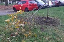 Strom na sídlišti Trávník, který zlikvidoval vandal