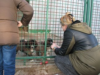 Štěkání a mňoukání na Ježíška v psím útulku v Lanškrouně.