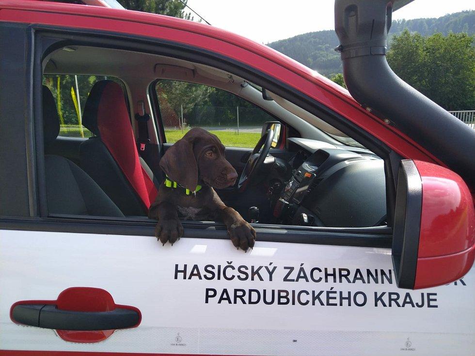 Nový pes záchranář Brit.