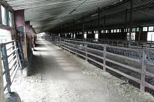 V Tatenicích krávy odpočívají na vodních matracích
