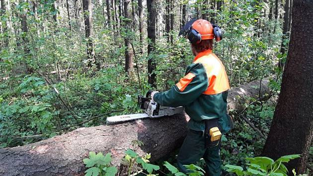 V lesích v Lanškrouně našli kůrovce.