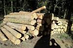 Kácení v městských lesích v Lanškrouně nesou někteří obyvatelé města nelibě.