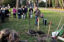 Výročí 30 let od Sametové revoluce se slavilo i v Chocni. V  parku u této příležitosti vysadili Lípu Josefa Luxe.
