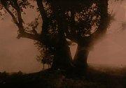 Muchova lípa a Babiččina vrba soutěží o titul Strom roku.