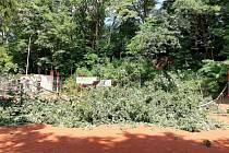 Jak se zlomil dub na volejbalovém hřišti