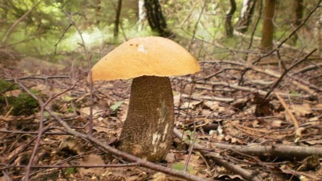 Fotoúlovek z budislavských lesů.