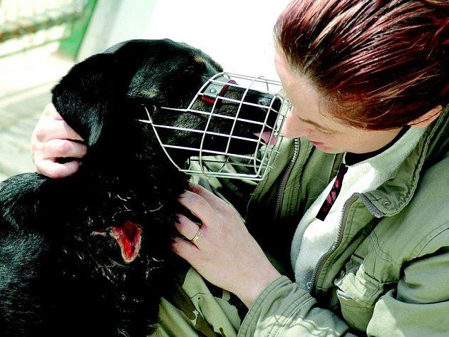 Těžce zraněný pes je v péči Stanislavy Jansové.