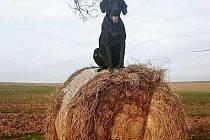 Hledaný pes Max.