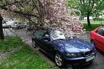 Na osobní automobil BMV spadla větev.