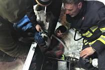 Hasiči před plameny zachránili tři osoby a pět psů