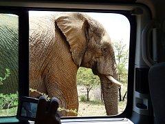 Z výpravy do Jižní Afriky.