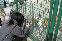 Štěkání a mňoukání na zajíčka v psím útulku v Lanškrouně.