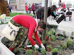 Projekt na oživení žamberské pěší zóny Zahrada bez plotu uspořádal ve středu 18. května Veřejné osázení záhonků na pěší zóně. Příchozí potěšily i malé tanečnice či hudebníci místní ZUŠ.