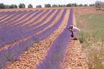 Josef Zavřel v Provence.
