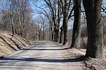 Stromy lemující silnici mezi Mladkovem a Pastvinami.