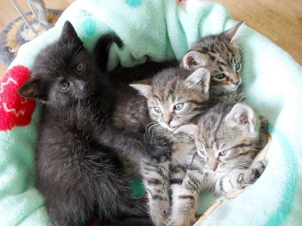 Koťata hledají nový domov.