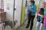 Den otevřených dveří v psím útulku Štěkání na zajíčka.