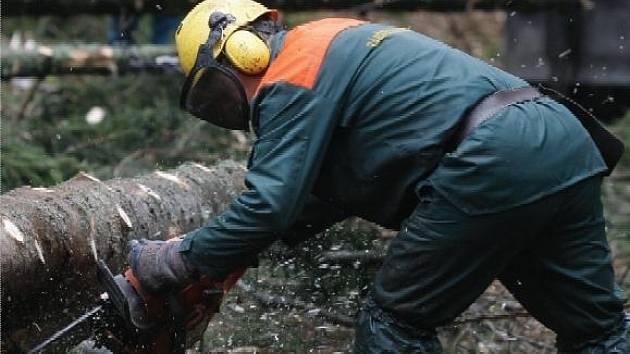 Ministerstvo zemědělství se s dřevaři dohodlo na dvou  modelech. Po jejich skončení se bude vyhodnocovat, který z nich je lepší.