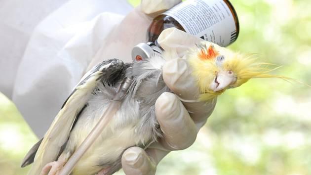 Papoušek zemřel zbytečně.