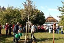 V Lukavici ve sváteční den zasadili strom svobody - lípu srdčitou.