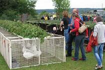 Z prodejní výstavy králíků, drůbeže, holubů a exotů ve Slatině u Vysokého Mýta.