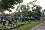 Spadlá lípa na vysokomýtském hřbitově.