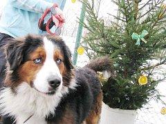 Štěkání na Ježíška pomohlo opuštěným psům