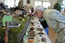 Tradiční výstava hub v Chocni.