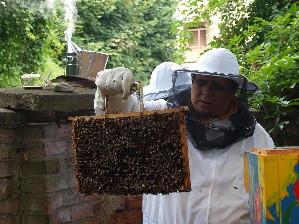 Jarní kontrola včelstva Ústí nad Orlicí, Foto: Jan Kašpar