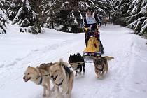 Závody psích spřežení - sprint o Pohár Lady Bright Magadan.