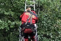 Záchrana kotěte v podání hasičů.