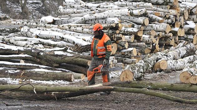 Výstavbě železničního koridoru předchází kácení stromů a dřevin.