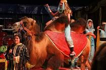 Cirkus Mondeo.
