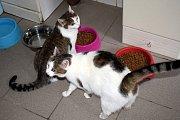 Pejskům i kočkám vybrali granule, maso, pamlsky i hračky.