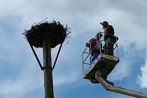 Úterní noční bouřka skácela v Žamberku sloup s čapím hnízdem, ve kterém se nacházela čtyři ptáčata. Na jejich záchraně se podíleli místní obyvatelstvo.