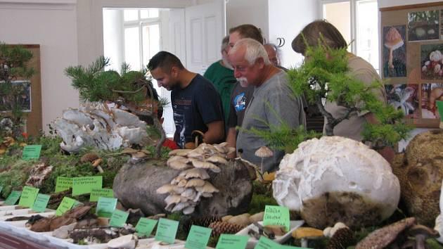 Výstava hub v Chocni.