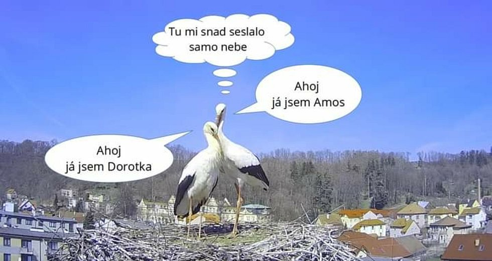 Foto: Čápi Brandýs nad Orlicí