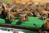 Včelstva jsou zdecimovaná a umírají. Zachraňme je, vyzývají inciátoři