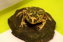 Na výstavě v letohradském muzeu najdete i modely žab či ukázku trvalé i dočasné zábrany.