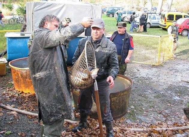 V sobotu se konal výlov rybníku Vrchovina u Chocně. Vydařil se po všech stránkách.