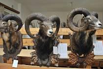 Výstava loveckých trofejí v Lanškrouně.