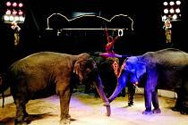 Cirkus Humberto.