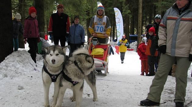 Ze závodu psích spřežení O pohár Lady  Bright Magadan.